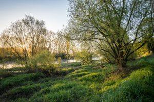 Flussaue, Leica Q bei f/5.6   1/160sec  ISO 100