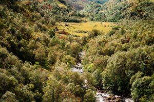 Schottland: Glen Nevis. M10 mit 50mm Summilux bei f/4.0  1/500sec  ISO 100