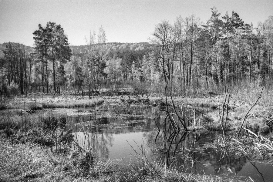 Das Moor bei Arrach. Leica IIIf mit 3,5cm Summaron, Orange-Filter, Kodak Tri-X