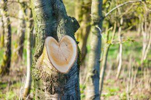 Holz mit Herz. Leica M9 mit 90mm Summarit bei f/3.4 1/500s  ISO 160