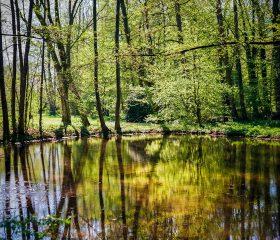 Teich im Vlothoer Kurpark. Kodak Ektar 100