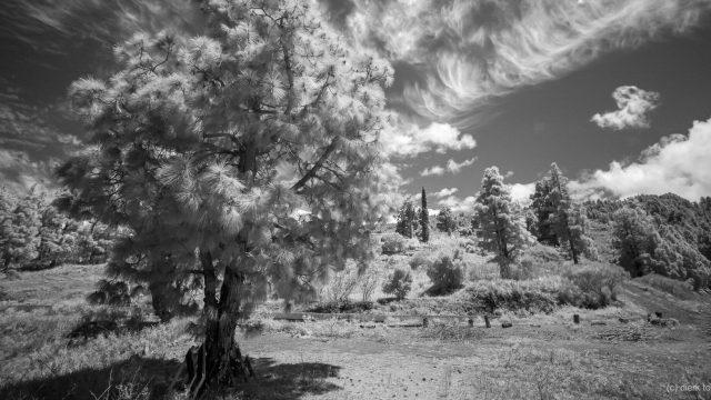 Leica Monochrom – die Welt in Graustufen