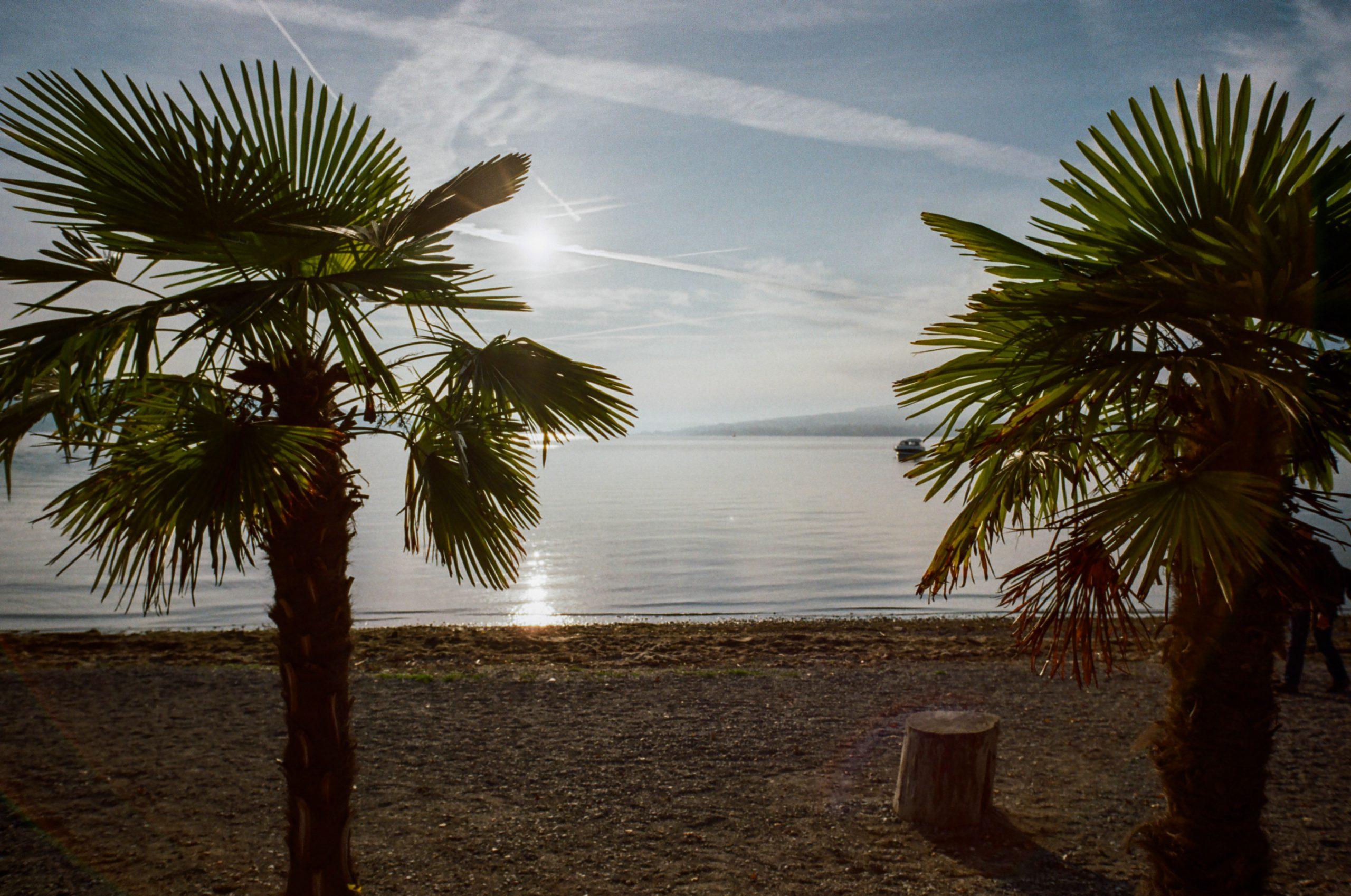 Südsee? Südlicher See. Spitze der Insel Reichenau im Bodensee. Man beachte die Leistung des Objektivs im Gegenlicht. BessaR4M, Voigtländer Color-Skopar 21/4.0. Kodak ProImage100.