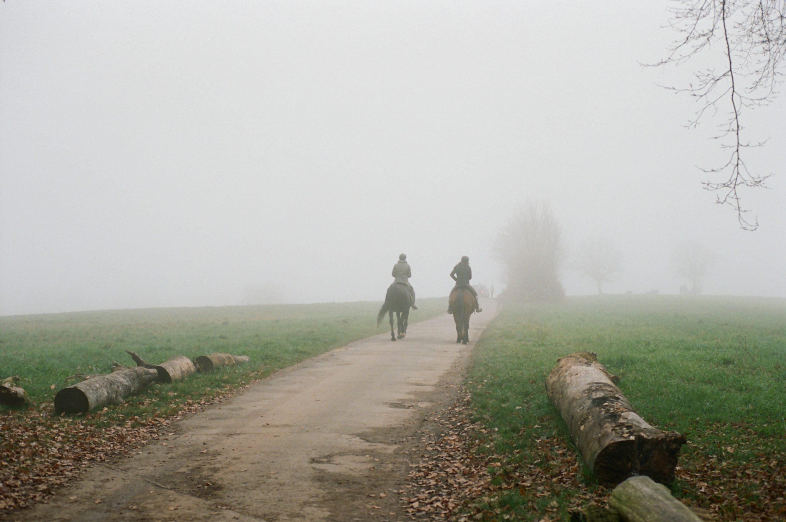 Herbstnebel am Bodensee. Zarte Farbwidergabe und schöne Tiefe. Konica Hexar RF mit  Konica M-Hexanon 50/2. Kodak Portra 400.