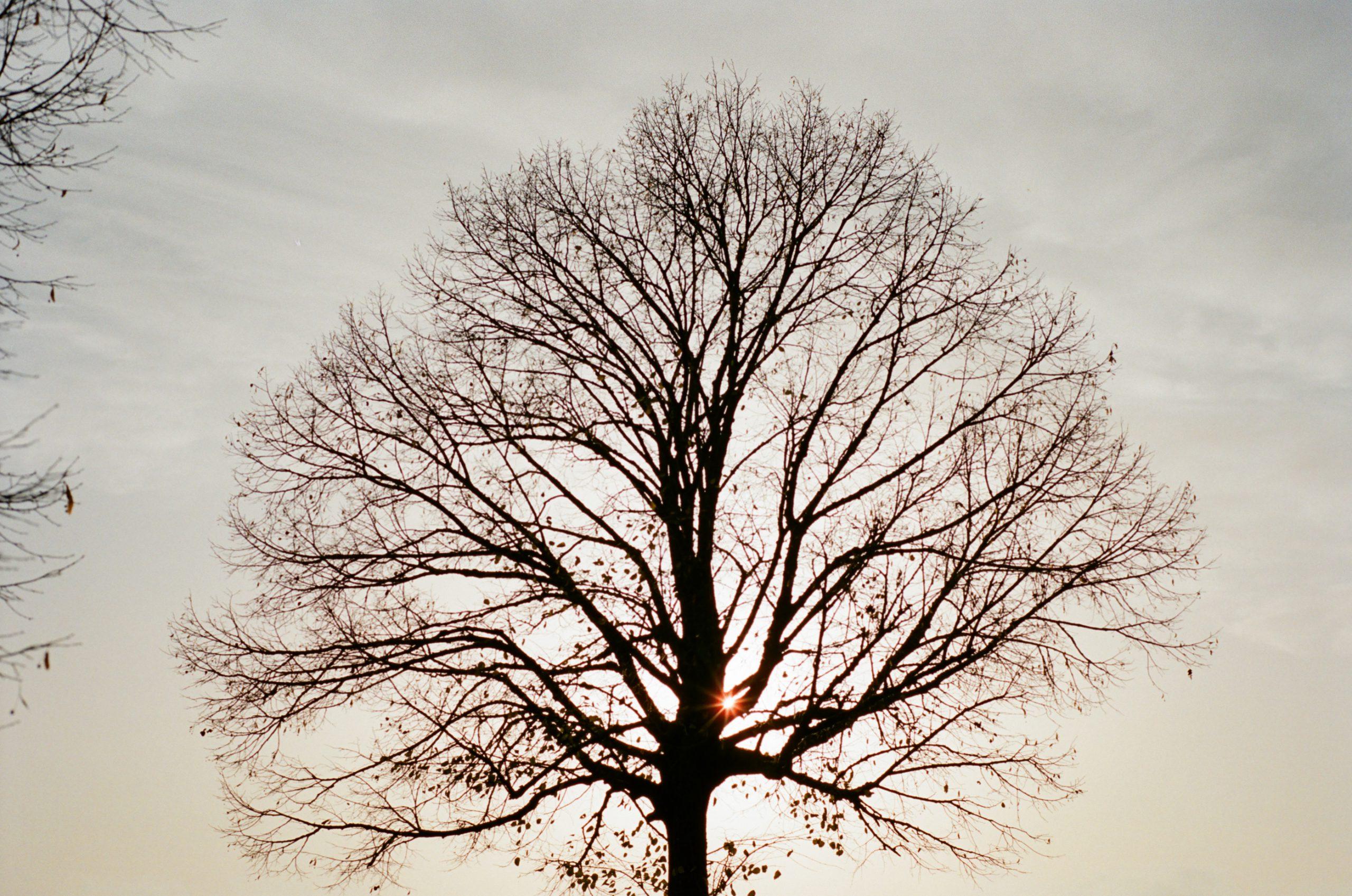 Bevor Nacht und Winter einsetzen. Das macht ein Objektiv, das die moisten Leica-M-Fotografen wahrscheinlich nicht einmal vom Hörensagen kennen, eine gute Figur. Konica Hexar RF mit Konica M-Hexanon 50/2. Kodak Portra 400.