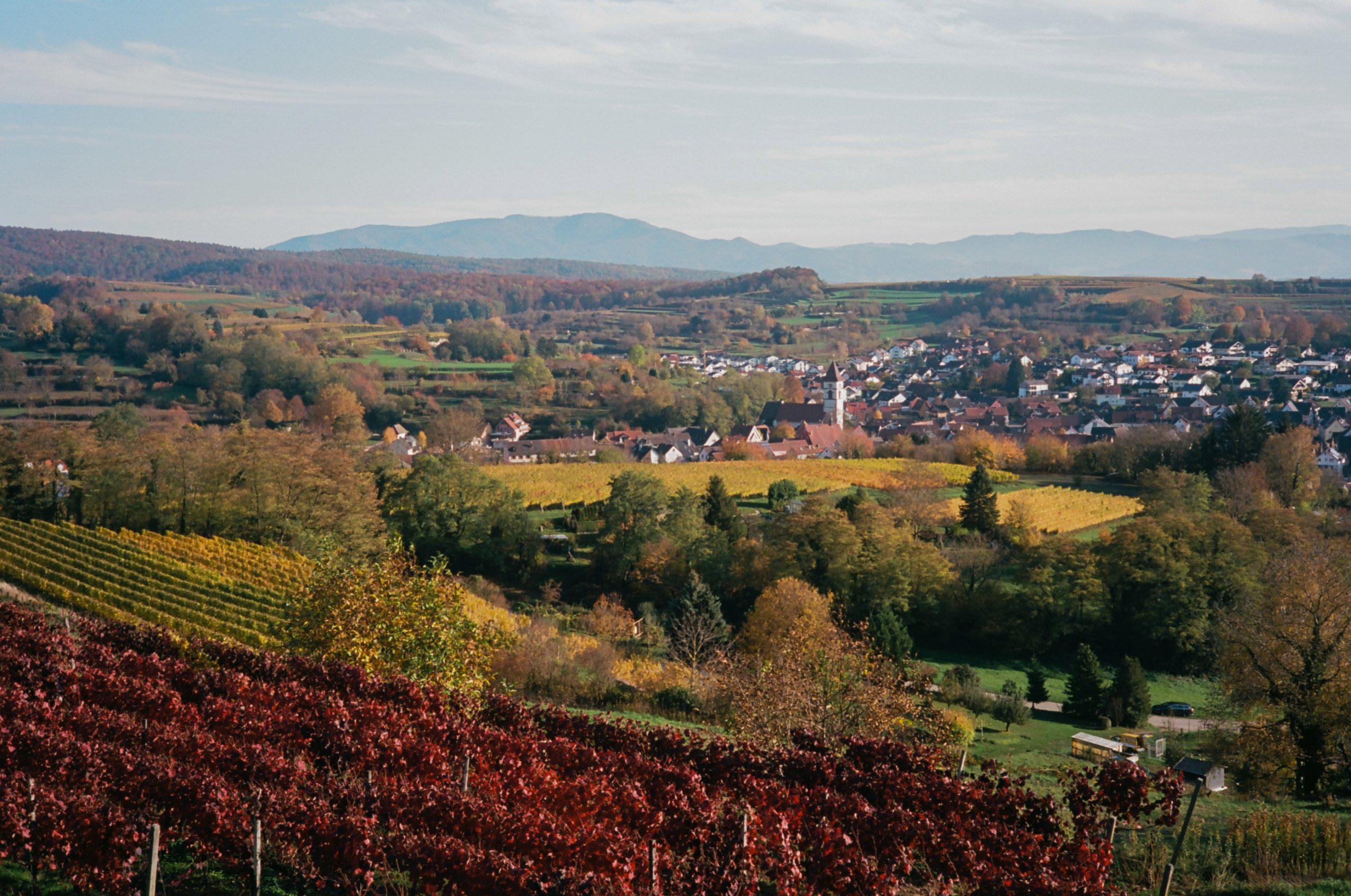 Noch ein Blick auf den Weinbauort Malterdingen, hier nun gegen den Schwarzwald gesehen. Rollei 35 RF mit Rollei Sonnar 40/2.8. Kodak Ektar 100.