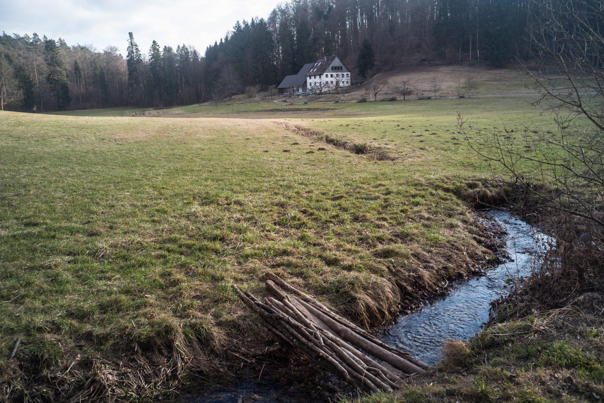 Im Bodensee-Hinterland, der Winter ist gerade so vorbei. Minolta M-Rokkor 28/2.8 an Leica M10, leichte Korrekturen in Lightroom.
