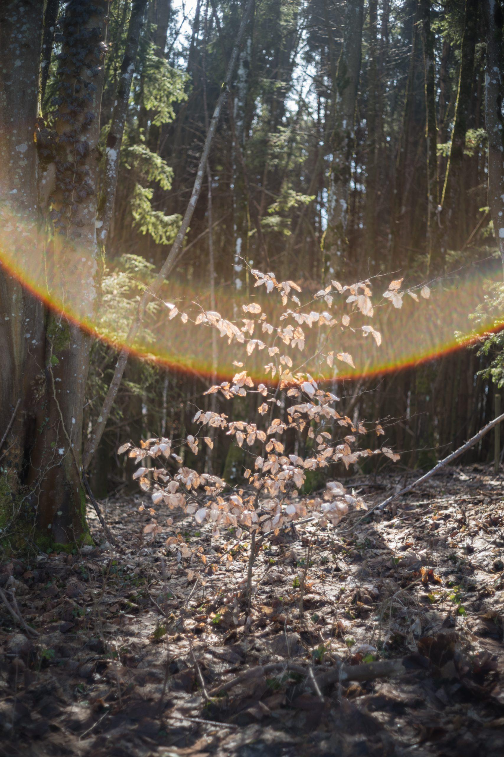 Wenn die Sonne fies reinscheint, kann aber auch so etwas passieren: Starke Flares, wie man sie bei einem Objektiv, das im Kern aus den 1970er Jahren stammt, nie ausschließen kann. Minolta M-Rokkor 40/2 an Leica M10, leichte Korrekturen in Lightroom