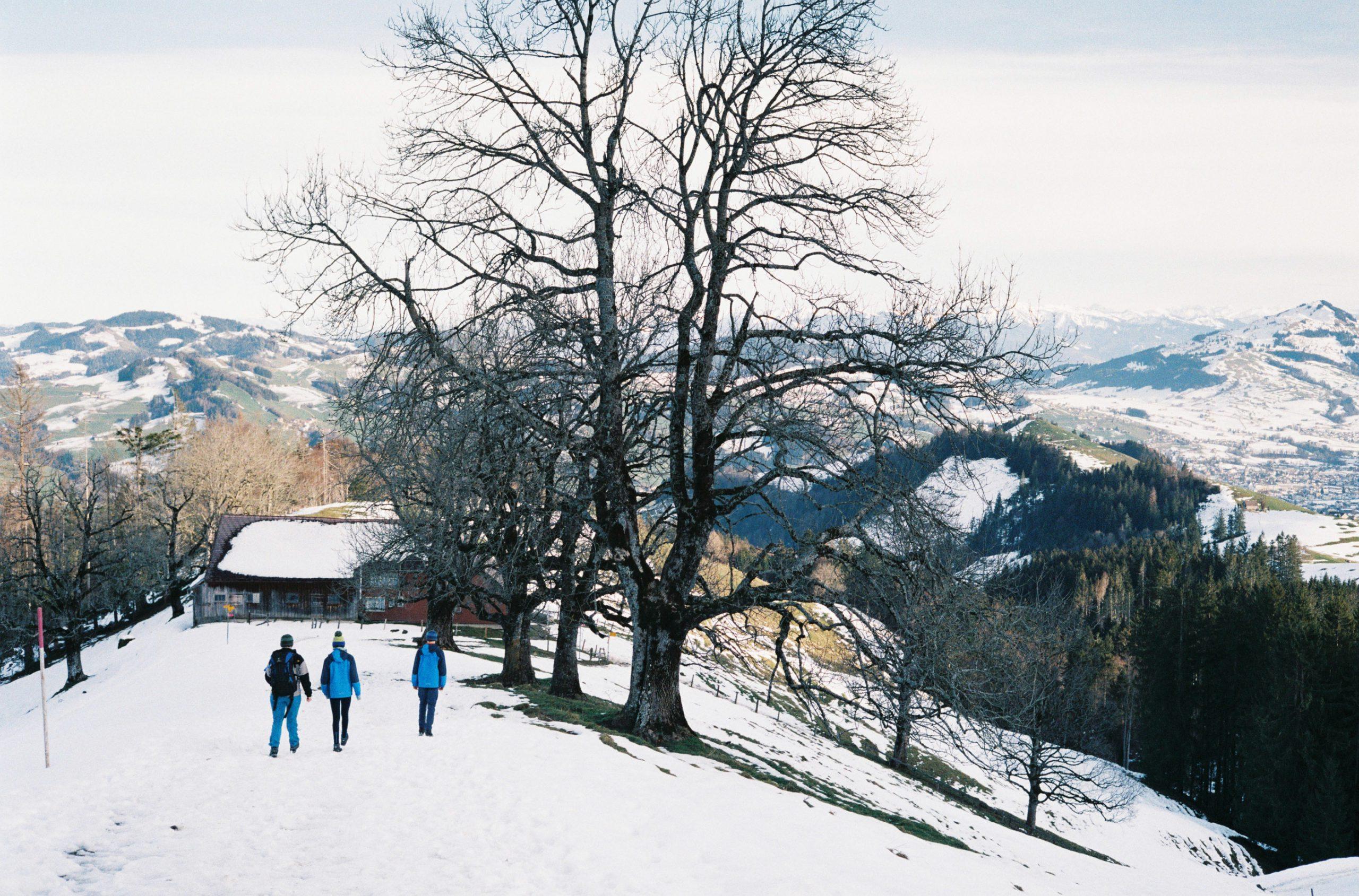 Frühwinter ist der Ostschweiz, wenige Tage vor der Grenzschließung. Summicron-C 40/2 an Leica CL. Fujifilm C200